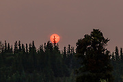 Early morning sunrise (4:00AM) from Teklanika Campground, Denali National Park.  Smoke from wildfires casts a pall.