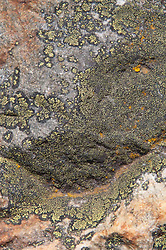 Rock Face with Lichen, North Cascades National Park, Washington, US