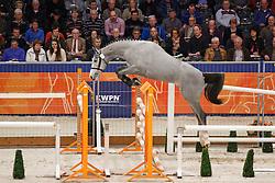005 - Amaretto LCH Z<br /> KWPN Stallion Selection - 's Hertogenbosch 2014<br /> © Dirk Caremans