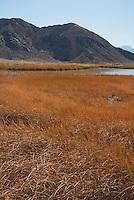 Saratoga Spring, Death Valley National Park, California