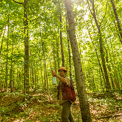 Tyler Pelland, a forester with LandVest, marks a tree in East Haven, Vermont.