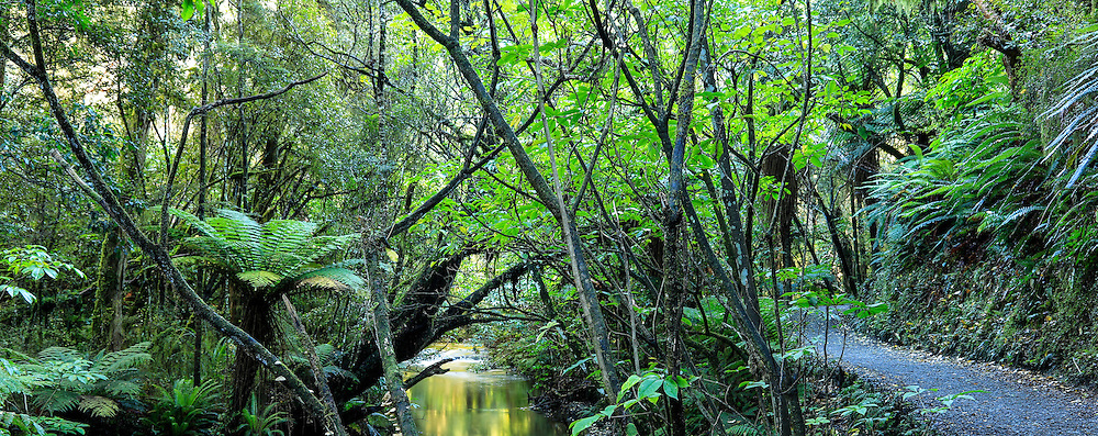 A walk along the forested Purakaunui River, in the Catlins, South Island, New Zealand