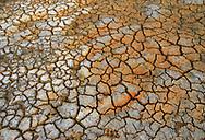 Seasonal marshlands, Pulicat Lake, Tamil Nadu, India
