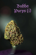 Nug photo of Bubba Purps shot in a professional photography studio.