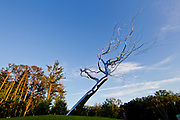 The entrance at Crystal Bridges Museum of American Art in Bentonville, Ark., showcases a sculpture by Roxy Paine titled Yield, on Monday, June 10, 2013.