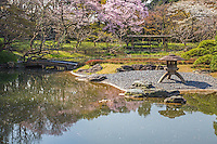 """Salura Cherry Blossoms at Imperial Palace East Gardens -made up of the Honmaru and Ninomaru areas of Edo Castle.  None of the Edo Castle buildings remain today, though the moats, walls, gates and guardhouses still exist.  Honmaru is the most spacious area of the garden and visitors can view cherry trees, roses, bamboo and a tea garden.  Ninomaru Garden is planted with 260 trees donated by each prefecture of Japan surrounding a pond.  In 1963 the garden was declared by the Japanese government a """"Special Historic Relic"""" under Cultural Properties Protection."""