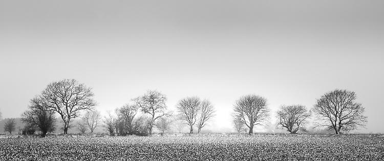 Danish Winter - Isle of Funen, Denmark