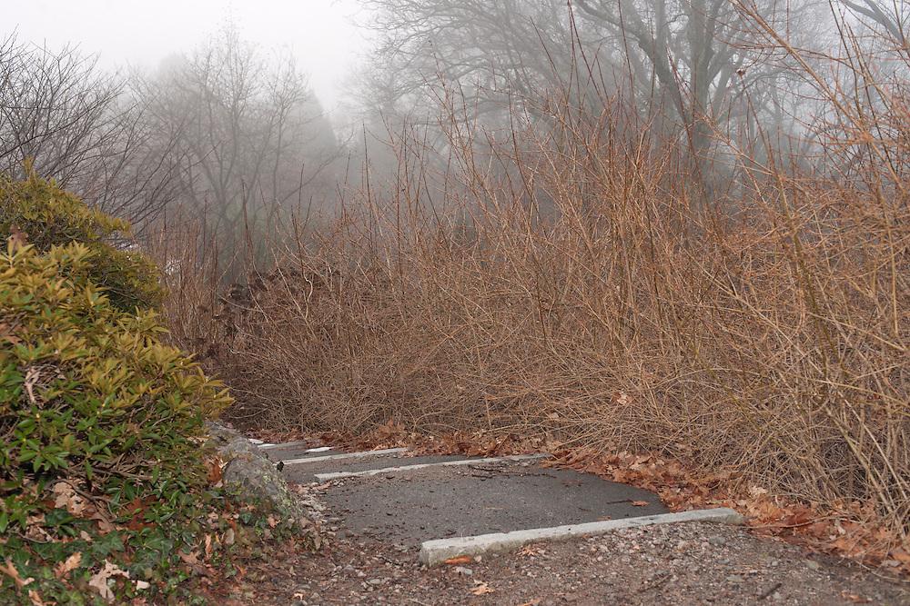 Path Down (Manmade), The Boston Arboretum, Massachusetts, 2013 Trees and park frozen, Boston, MA