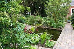 The pond area with angelica, primulas and Hydrangea petiolaris in the foreground. Brick path