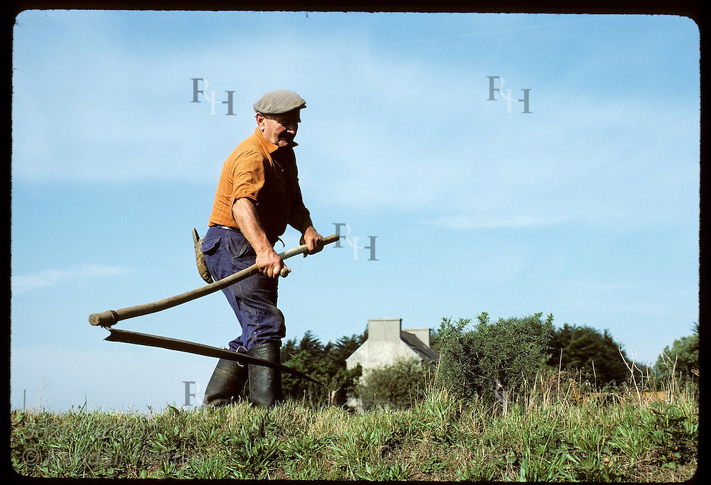 Brittany farmer cuts his field with a scythe; near Brest.  France