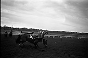 """16/01/1963<br /> 01/16/1963<br /> 16 January 1963<br /> Leopardstown Races at Leopardstown Race track, Dublin. Jockey T.S. Murphy parting company with his mount """"Rock Forest"""", which fell at the last jump in the Dundrum Steeplechase."""