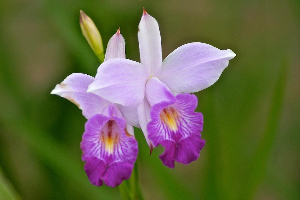 Costa Rica rain forest orchids Costa Rica