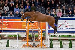 001, Amant Keizersberg Z<br /> KWPN hengstenkeuring - 's Hertogenbosch 2020<br /> © Hippo Foto - Dirk Caremans<br />  30/01/2020