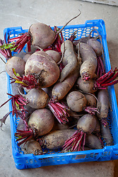 Harvested beetroots in tray
