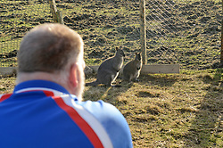 EXCLUSIVE: An Australian man has created his own Outback outpost 11,000 miles from home on the Shetland Islands – and he even has WALLABIES. Tasmanian Dave Kok, 42, has built his own Aussie oasis on the Scottish archipelago after deciding to settle there when he was travelling Europe. Now Dave lives with his Shetland native wife Louise, 38, and two daughters Caitlin, 11, and Ruby, aged four. Social care worker Dave came to the islands in the late 90s and since 2016 has been building his own watering hole choc-full of Australiana on the island of Burra. Dave's place 'The Outpost' is a renovated wooden porta cabin filled with Tasmanian beers, Tim Tams, books on bush craft and Aussie Rules sporting memorabilia. Locals use the Outpost as their local bar and meeting place, as the nearest pub or café is three bridges and three islands away. And visitors can now enjoy the Outpost's wallabies Ned and Kelly who David brought to the island this winter. Based on the Shetland Islands latitude the marsupials could be the most northerly of their species anywhere on the planet. Dave said visiting Australians are often surprised to find the antipodean paradise in such a remote location. 16 Feb 2018 Pictured: Pic from Dave Donaldson/ Magnus News Agency. Pic shows the David Kok and (left to right) wallabies Ned and Kelly at the Aussie-themed Outpost in the Shetland Islands. An Australian man has created his own Outback outpost 11,000 miles from home on the Shetland Islands – and he even has WALLABIES. Tasmanian David Kok, 42, has built his own Aussie oasis on the Scottish archipelago after deciding to settle there when he was travelling Europe. Now David lives with his Shetland native wife Louise and two daughters Caitlin, 11, and Ruby, aged four. Social care worker David came to the islands in the late 90s and has built his own watering hole choc-full of Australiana on the island of Burra. David's place 'The Outpost' is a renovated wooden porta cabin filled with T