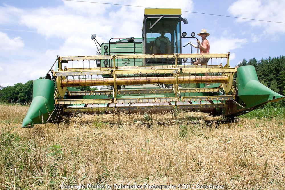 Ami Gignac rides along with Tim Fox on the combine as they harvest the Warthog hard red winter wheat.