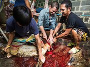 24 SEPTEMBER 2015 - BANGKOK, THAILAND:  Men ritualistically sacrifice sheep during the celebration of Eid al-Adha at Haroon Mosque in Bangkok. Eid al-Adha is also called the Feast of Sacrifice, the Greater Eid or Baqar-Eid. It is the second of two religious holidays celebrated by Muslims worldwide each year. It honors the willingness of Abraham to sacrifice his son, as an act of submission to God's command. Goats, sheep and cows are sacrificed in a ritualistic manner after services in the mosque. The meat from the sacrificed animal is supposed to be divided into three parts. The family retains one third of the share; another third is given to relatives, friends and neighbors; and the remaining third is given to the poor and needy.    PHOTO BY JACK KURTZ