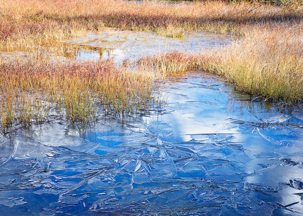 Frozen Pond and Autumn Grasses in Early Morning Light