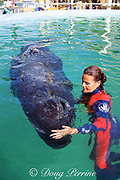 trainer at Miami Seaquarium caresses baby sperm whale, Physeter macrocephalus, brought there for rehabilitation after stranding, Florida