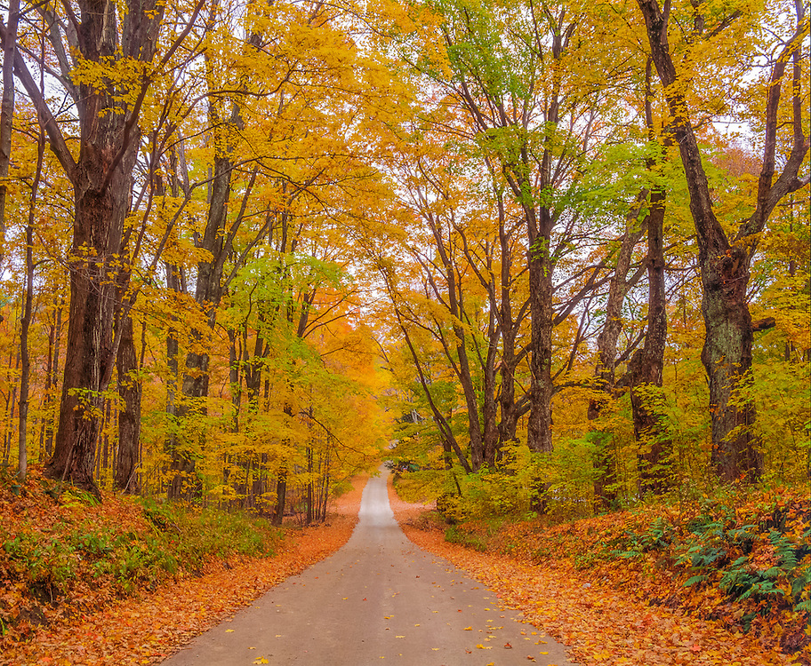 Fall country lane lined with sugar maples in fall foliage, Berkshires, Pittsfield, MA