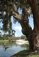 A young boy swings from a large live oak tree on the banks of Lake Ivanhoe in Orlando, Florida.