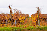 Chateau la Voulte Gasparets. In Gasparets village near Boutenac. Les Corbieres. Languedoc. France. Europe. Vineyard.