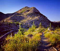 Hiking Trail Near Windy Ridge, Mt. St. Helens National Volcanic Monument, Washington, US