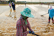 24 APRIL 2013 - SAMUT SONGKHRAM, SAMUT SONGKHRAM, THAILAND: Migrant workers rake salt in a field that is ready to be harvested in Samut Songkhram, Thailand. The 2013 salt harvest in Thailand and Cambodia has been impacted by unseasonably heavy rains. Normally, the salt fields are prepped for in December, January and February, when they're leveled and flooded with sea water. Salt is harvested from the fields from late February through May, as the water evaporates leaving salt behind. This year rains in December and January limited access to the fields and rain again in March and April has reduced the amount of salt available in the fields. Thai salt farmers are finishing the harvest as best they can, but the harvest in neighboring Cambodia ended 6 weeks early because of rain. Salt has traditionally been harvested in tidal basins along the coast southwest of Bangkok but industrial development in the area has reduced the amount of land available for commercial salt production and now salt is mainly harvested in a small part of Samut Songkhram province.      PHOTO BY JACK KURTZ