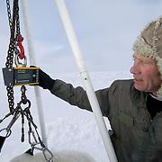 Dr. Steve Amstrup weighs a polar bear on the Beaufort Sea, Alaska.
