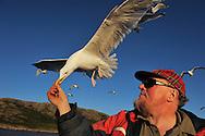 "Ole Martin Dahle, ""The Eagle man"", feeding a herring gull, Larus argentatus,  Flatanger, Nord-Trøndelag, Norway"