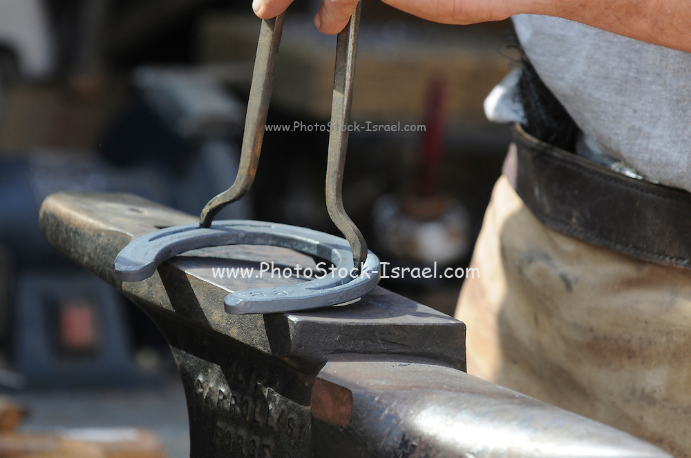 Farrier preparing a horse's hoof for new shoe Preparing the horseshoe