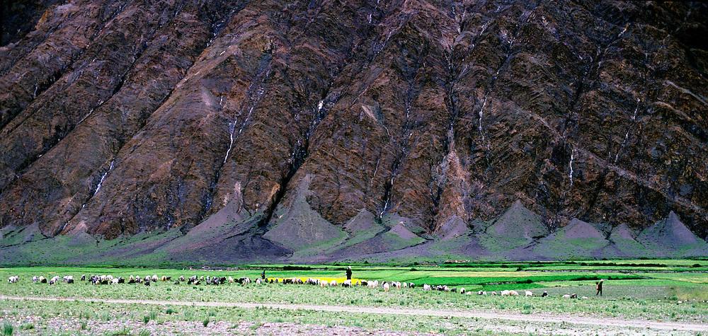 Field, Mountain, sheep and shepherds, panoramic landscape Tibet.