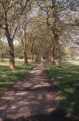 Trees in park in spring,