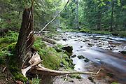 Fluss Vydra, Sumava Nationalpark, Böhmerwald, Tschechien | river Vydra, Sumava national park, Bohemian Forest, Czech Republic