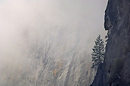 Lone pine tree growing on sheer cliff Solid rock wall and storm clouds, Yosemite Valley, Yosemite National Park, California