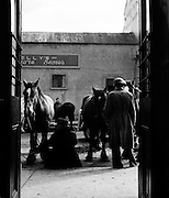 Ballinasloe Horse Fair, Co. Galway.25/04/1957..The Ballinasloe Horse Fair is a horse fair which is held annually at Ballinasloe, the second largest town in County Galway, in the western part of Ireland. It is one of Europe's oldest and largest Horse Fairs, dating back to the 1700s. This annual event attracts up to 100,000 visitors from all over the world, with many returning to the town year after year. This festival is one of the most important social and economic events in the life of the town. The town is also renowned for horse and pony riding, show jumping and other equestrian activities which take place throughout the year.