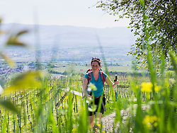 Woman hiking through vineyards near Eichstetten, Baden-Wuerttemberg, Germany