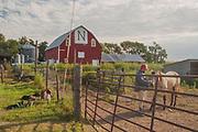 Dogs, Farm Hand, Horse, Overlees Farm, Franklin, Nebraska, Heartland barns, Midwest, Great Plains, Grain Silos