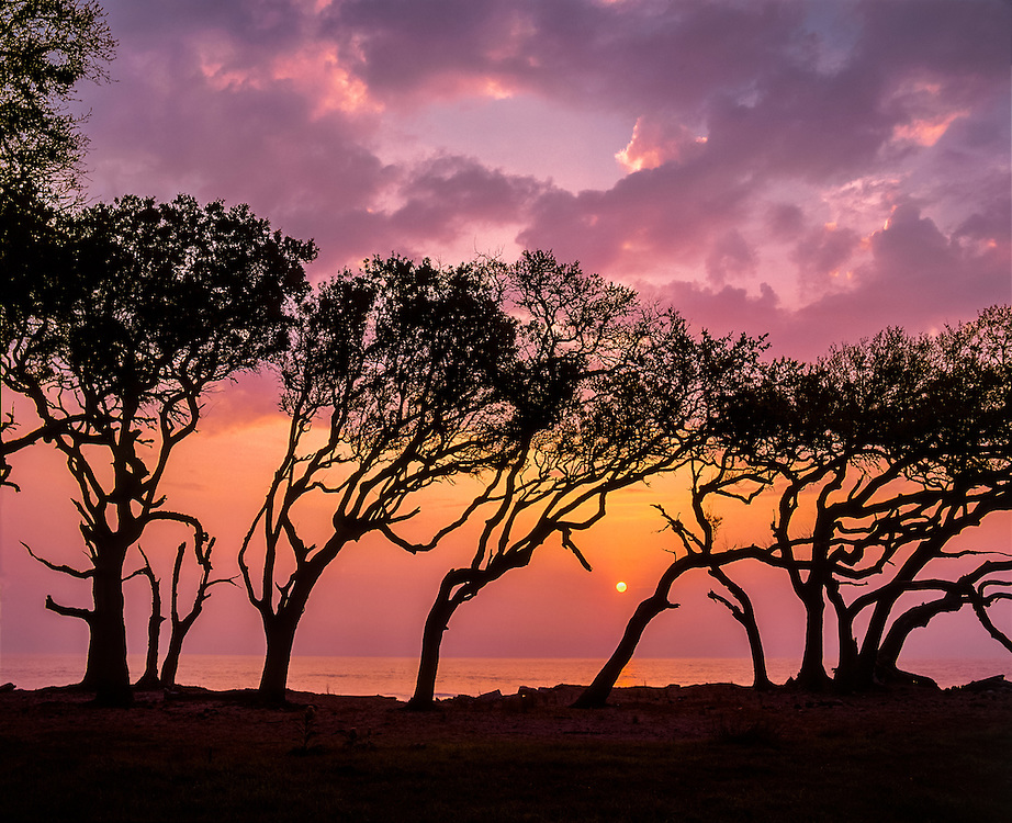 Wind sculpted oaks at waters edge, silhouettes at sunrise, color lights up the sky & clouds, Jekyll Island, GA