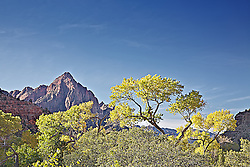 The Watchman, Yellow cottonwood, fall colors, Zion National Park
