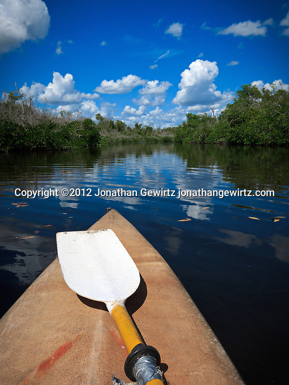 View from a kayak on the Turner River in the Big Cypress section of the Florida Everglades. WATERMARKS WILL NOT APPEAR ON PRINTS OR LICENSED IMAGES.