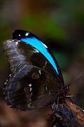 Sao Roque de Minas_MG, Brasil...Parque Nacional da Serra da Canastra em Sao Roque de Minas, Minas Gerais. Na foto uma borboleta...Serra da Canastra National Park in Sao Roque de Minas, Minas Gerais. In this photo a butterfly...Foto: JOAO MARCOS ROSA / NITRO.