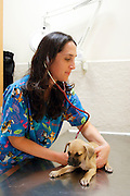 Female vet examines a puppy in her clinic