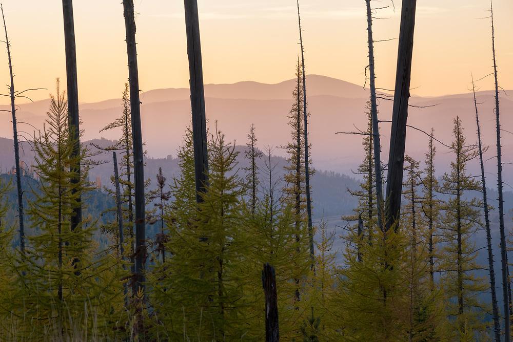 White Mountain burn area at sunset, Colville National Forest, Washington.