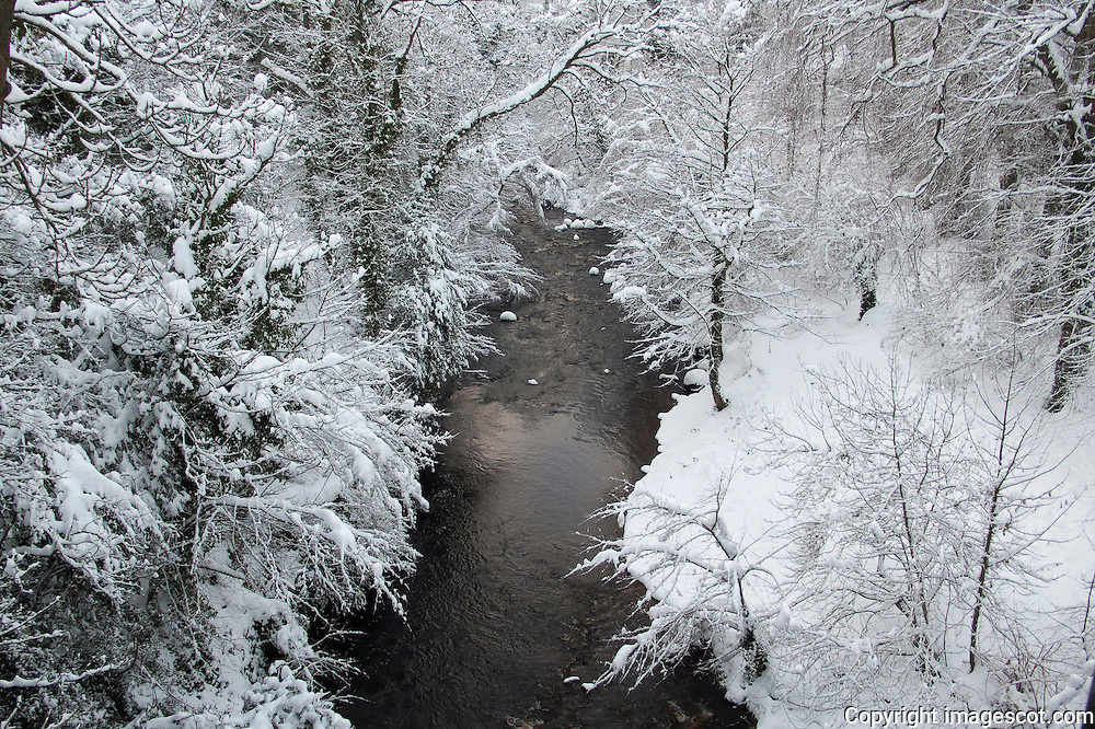 Winter woodland, Water of Leith