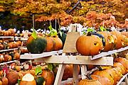 Pumpkin festival, Keene, Cheshire County, New Hampshire, NH, USA
