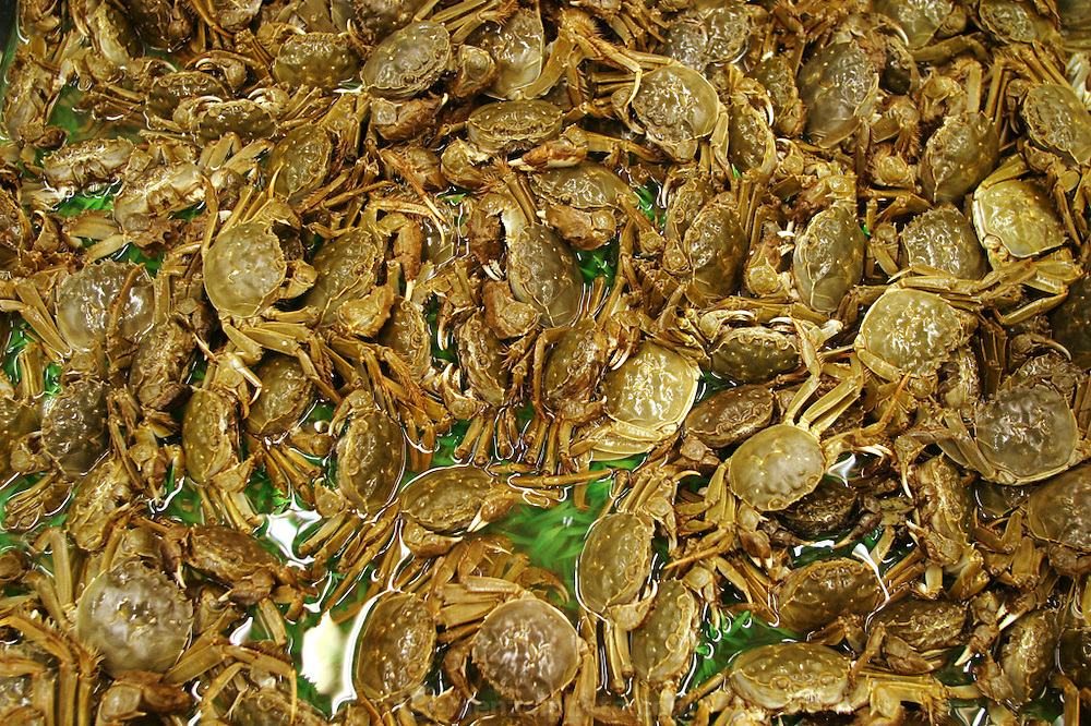 Live crabs at Ito Yokado, a Japanese supermarket chain in Beijing, China. In many restaurants and markets in China, much of the seafood is sold live as a guarantee of freshness. (From a photographic gallery of fish images, in Hungry Planet: What the World Eats, p. 204).
