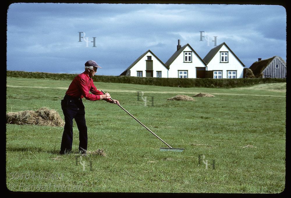 Bjorgvin Agustsson rakes hay at Reykjavik's Arbaer Folk Museum to feed to his horses. Iceland