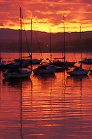 Sunrise at Monterey Harbor showing sailboats tied to their moorings.