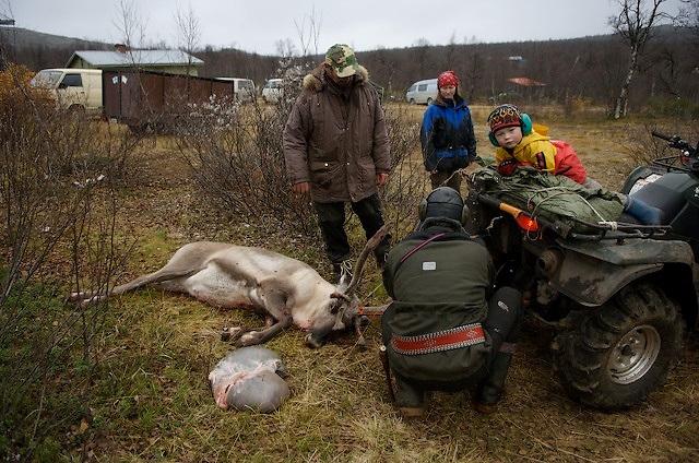 First reindeer slaughter for Sami boy.